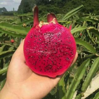 水果微商加盟代理 果园直发 原产地直发 免费代理
